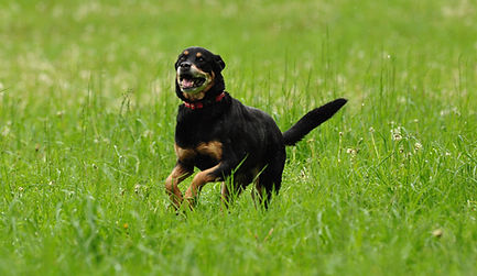 Happy-dog-2.jpg