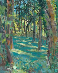 Woods above Kemerton (summer 2020)