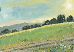 Summer Evening, above Kemerton toward The Malvern Hills