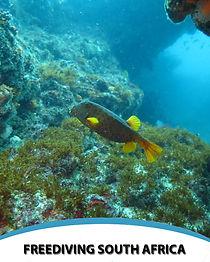 daily dives.jpg