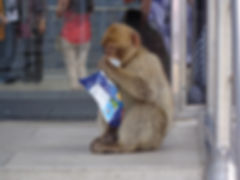 joshua-powell-website-projects-thumbnail-wildlife-human-interaction