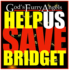 Help Us Save Bridget JPG A.jpg