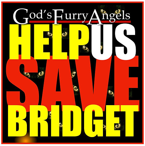 Help Us Save Bridget JPG A.jpg