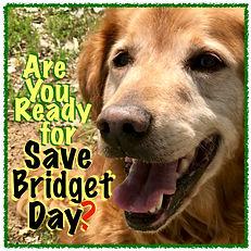 Save Bridget Day 4 JPG.jpg
