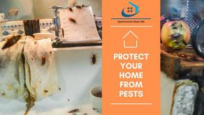 Tenant Tips for Pest Infestations