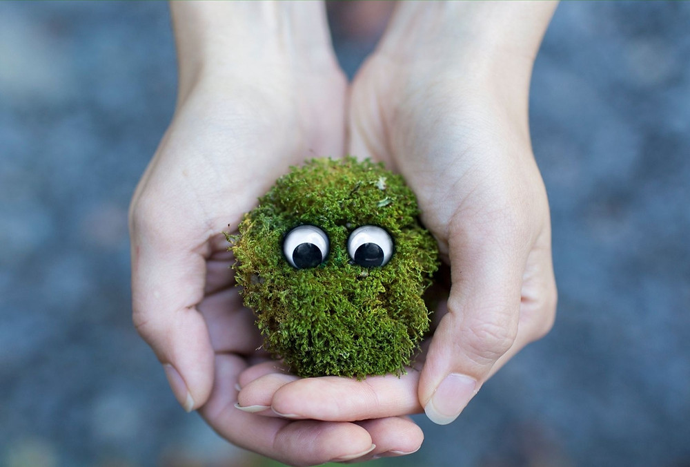 Hands holding a moss ball with eyeballs.