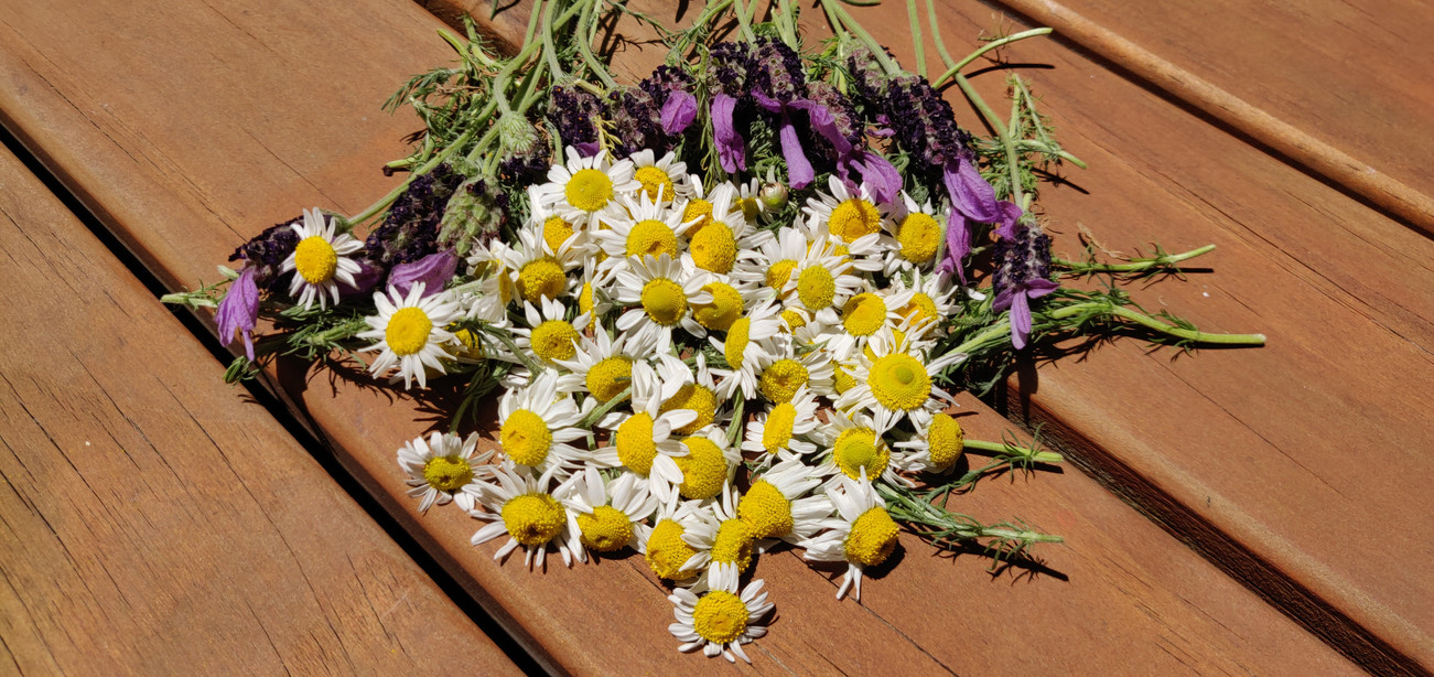 Home Grown Lavender And Chamomile For Talismans