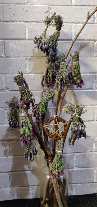 Home Grown Lavender Drying For Talismans