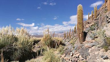 Dans le desert d'Atacama pour la retraite Tantracoeur 2020