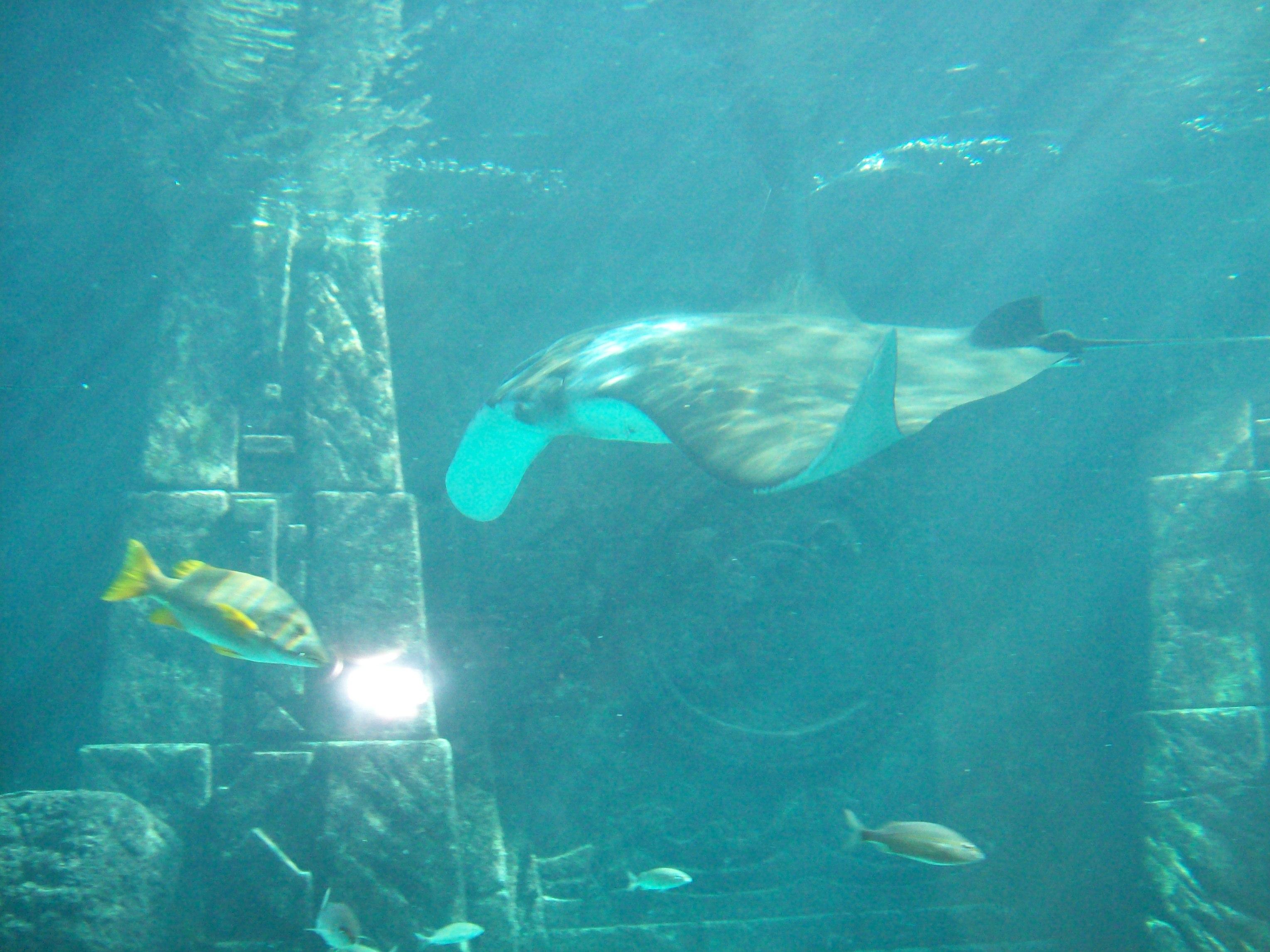 L'aquarium 2.JPG