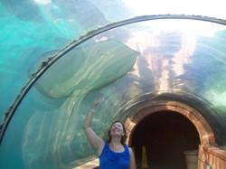 Des aquariums magnifiques.JPG