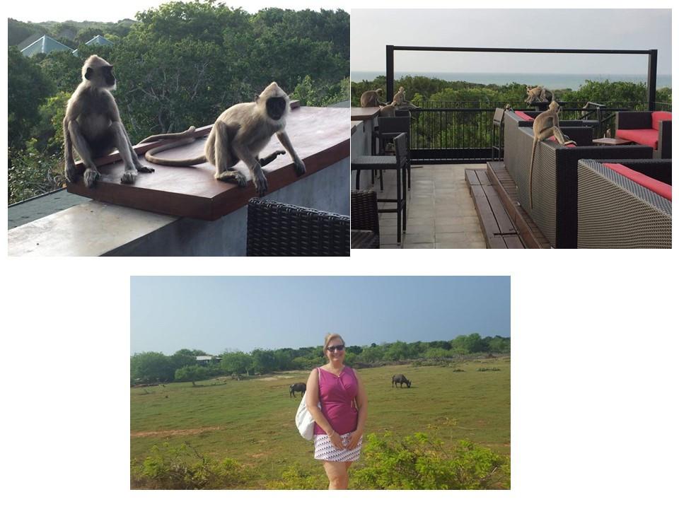 Un cour séjour au Sri Lanka