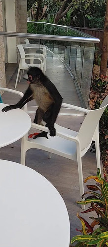 petit singe.jpg