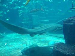 L'aquarium.JPG