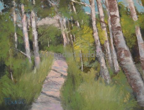 Tahoe Shadowed Path