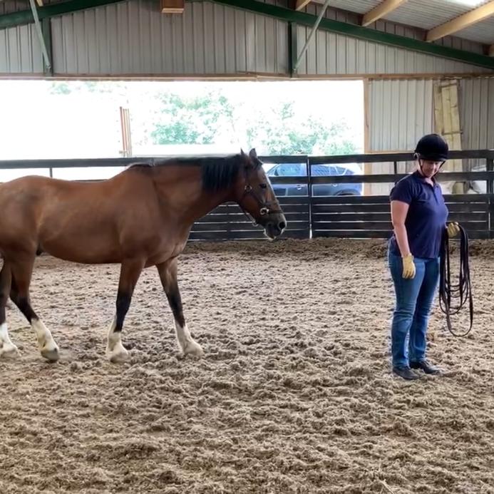 Grant Bazin - Natural Horsemanship