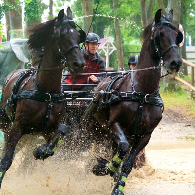 Carriage Driving - Taster Day