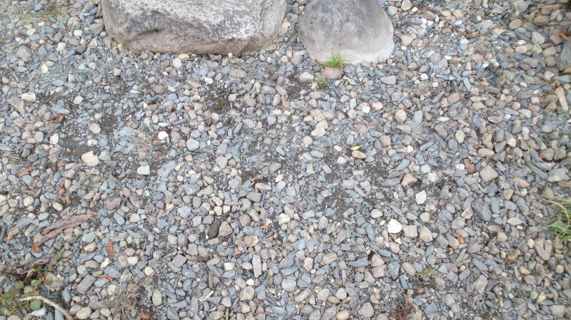 Hundreds of small pebble on a rocky shoreline. There is sone driftwood and larger rocks in the image too