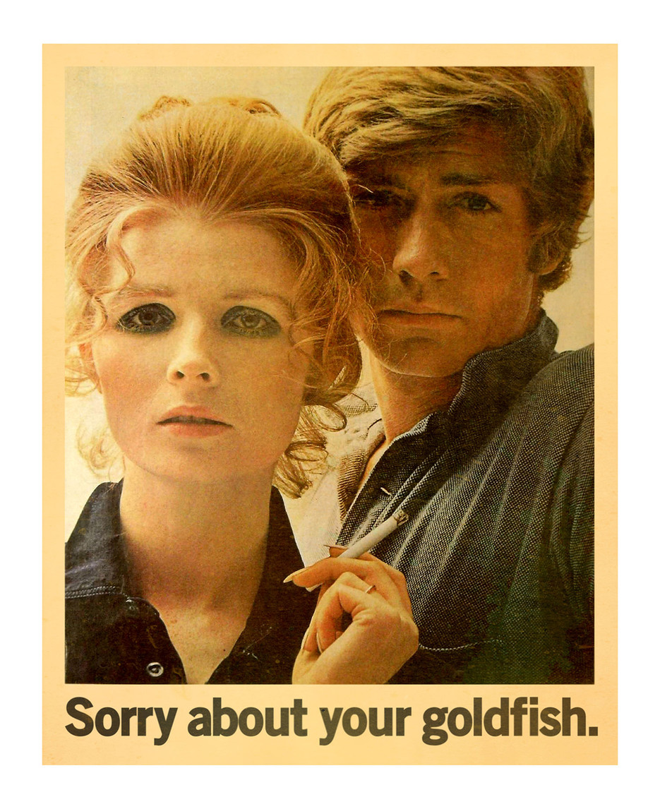 goldfishweb.jpg