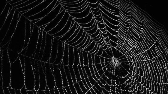 A Noiseless Patient Spider by Whitman - With Poet Rohn Bayes