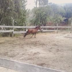 #horses #garranas #ecoturismo #CabrilEcoRural #hardwork #holidays #workinprogress #lifecanbesimple #