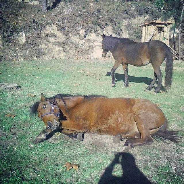 #wildlife #geres #horses #montalegre #cabrilecorural #lifecanbesimple