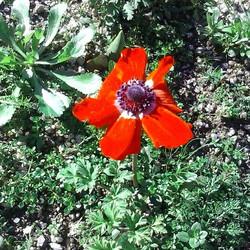 #nature #nationalpark #geres #CabrilEcoRural #Montalegre #lifecanbesimple #myflower