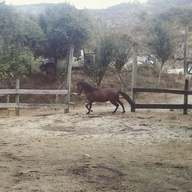 #horses #CabrilEcoRural #Montalegre #holidays #geres #nationalpark #lifecanbesimple