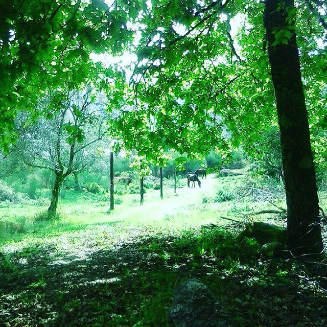 #visitportugal #nature #nationalpark #horses #geres #montalegre #wildlife #lifecanbesimple