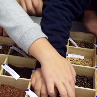 A importância das sementes