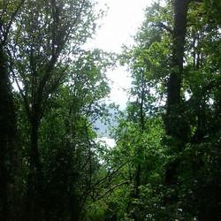 #visitportugal #nature #nationalpark #geres #montalegre #cabrilecorural #wildlife #lifecanbesimple