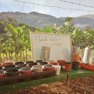 Plantação no dia da Floresta autóctone