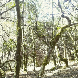 #nature #nationalpark #geres #Montalegre #CabrilEcoRural #holidays #lifestyle #lifecanbesimple