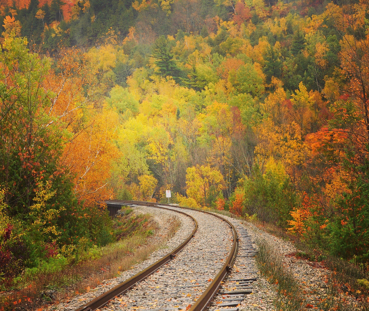 Fall colours on railway track, Belfountain