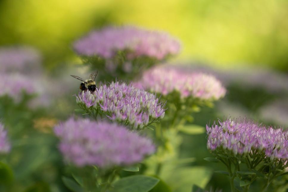 Summer buzz