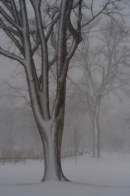 Winter snow like a sketch