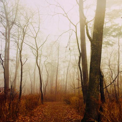 Foggy forest path