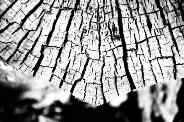 Tree stump in black and white