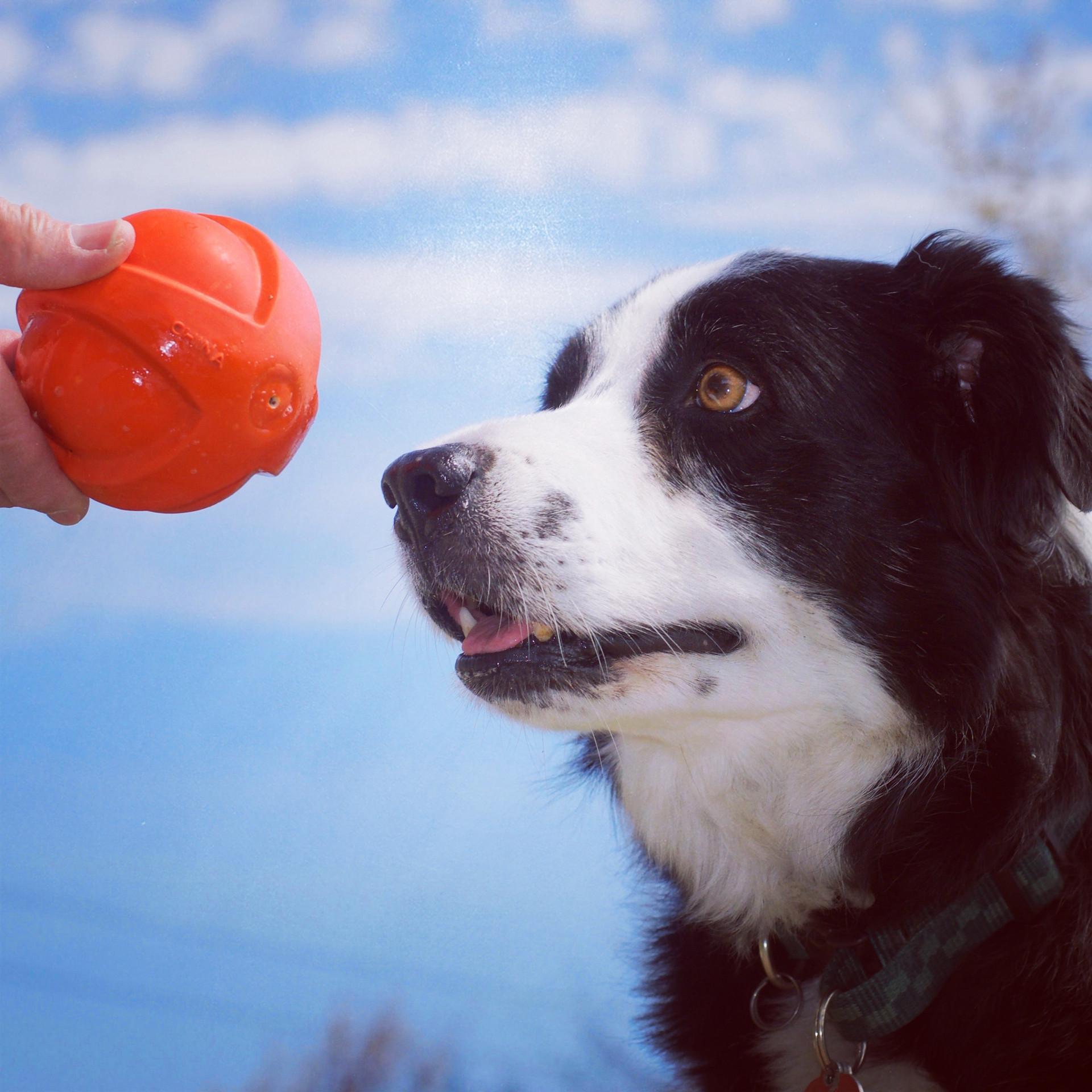 The ball, the ball, the ball