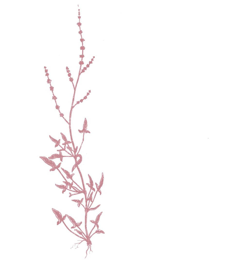 Sabine Rufener Illustration Achtsamkeit Blumen Katharina Rufener