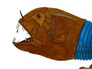 Sabine Rufener Illustration Tiere Marker Monster