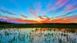 MB huntington wetlands