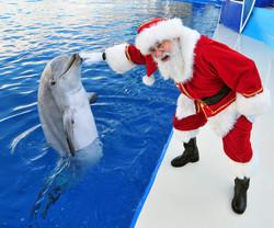 orlando dolphin santa