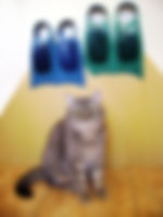 monolast-cat.jpg