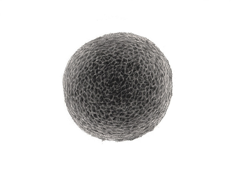 #NeutralMatter #LifeMatter #EggCell #01 Pencil on paper 400 x 300mm