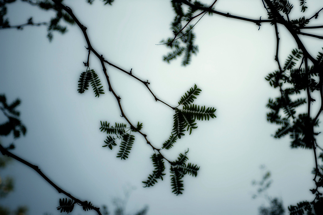 Twig, Branch leaves in the sky