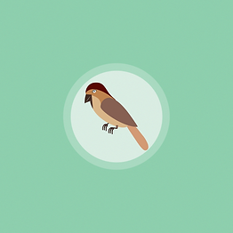 sparrow-Green.png