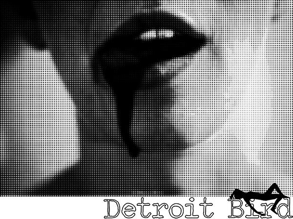Detroit Bird Photography