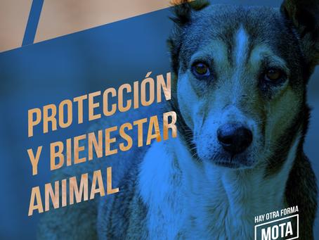 Protección y bienestar animal