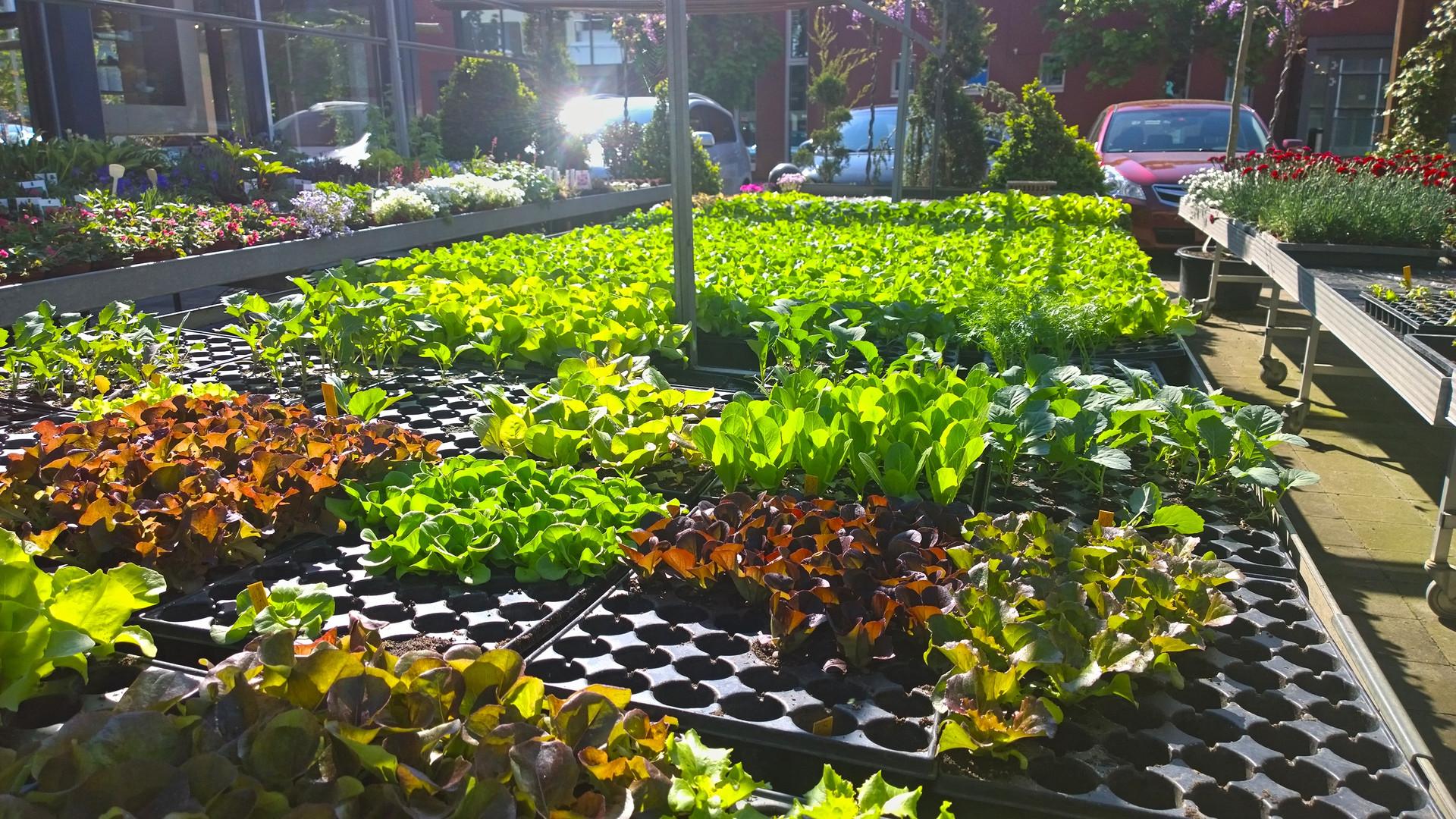 Gemüsesetzlinge.jpg